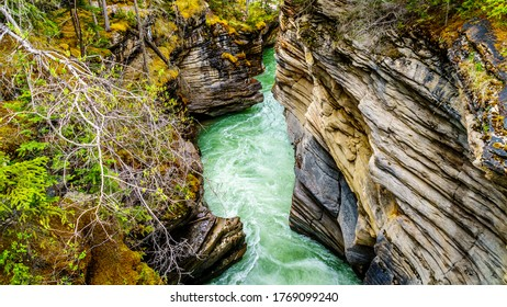 The turquoise water of the Athabasca river flowing through the canyon right after the Athabasca Falls in Jasper National Park, Alberta, Canada