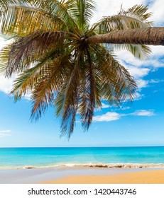 Turquoise water and palm tree in La Perle beach in Guadeloupe, French west indies. Lesser Antilles, Caribbean sea