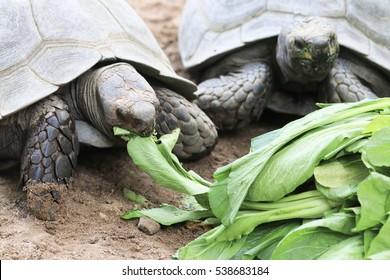 Turtle is animal working slowly