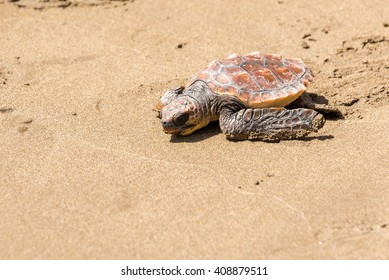 Turtle Baby on beach