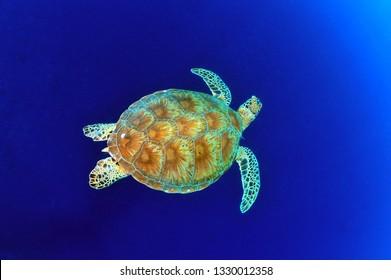 199.280 chùm ảnh về con Rùa, ngộ ngĩnh đáng yêu nhất Thế Giới