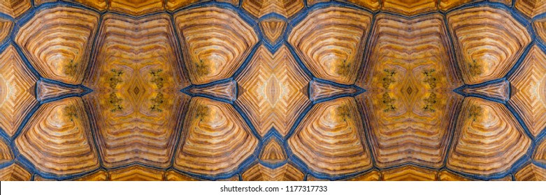 Turtle carapace, Close up texture and pattern of turtle shell in panoramic view use for web design and abstract background