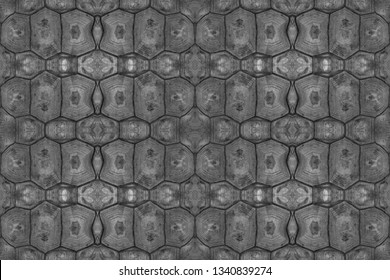Turtle carapace, Close up texture and pattern of turtle shell use for web design and abstract background