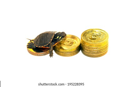 Turtle climbing on U.S. coins isolated on white background representing financial concept.