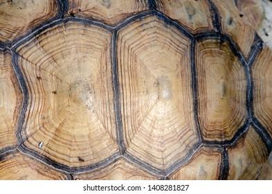 turtle closeup texture pattern background