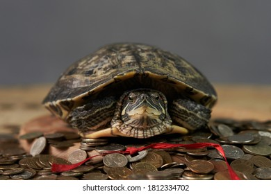 turtle with coins on a gray backgroun