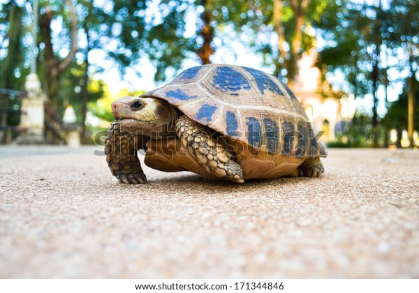 Turtle crawling on the floor