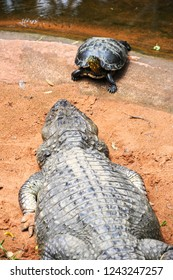 Turtle and crocodile at Parque das Aves on Brazil