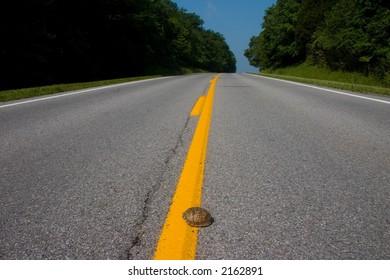 turtle crossing road on stripe median