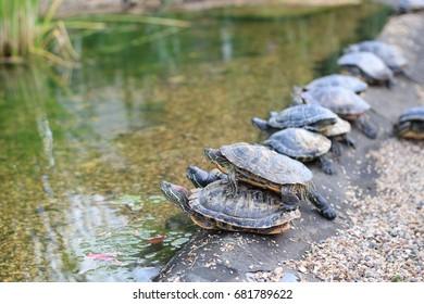 Turtle curiosity