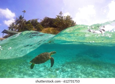 Turtle Diving In Caribean Island