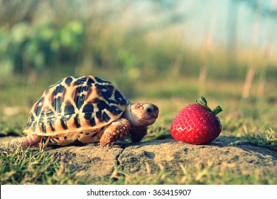 turtle eating berry (focus is on berry added filter)