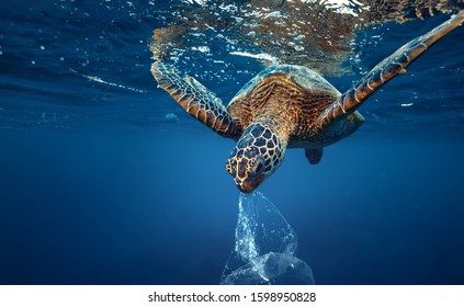 A turtle eating plastic bag underwater in open sea, Water Environmental Pollution Problem