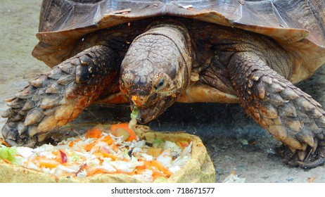 A turtle eats vegetables in zoo