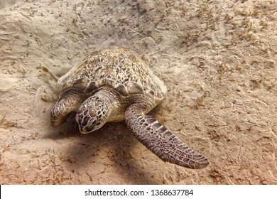 Turtle in front of sand
