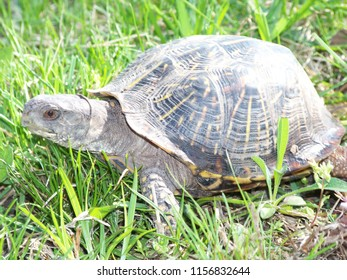 Turtle in the great outdoors.