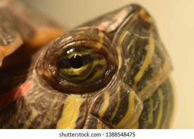 Afbeeldingsresultaat voor turtle eyes