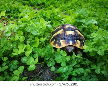 turtle in the green grass