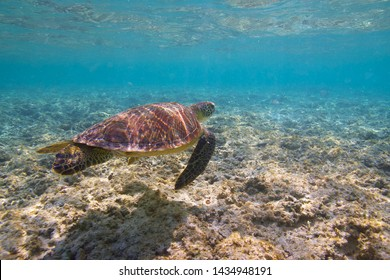 Turtle and Hateruma Blue in Okinawa