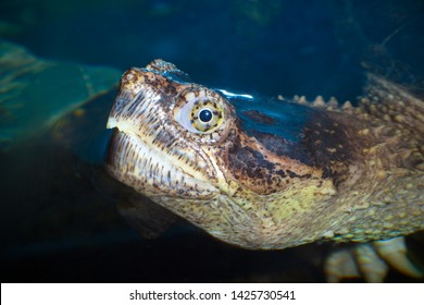 turtle head marine reptile slow animal eye closeup