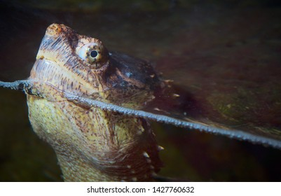 turtle head water reptile giant monster eye