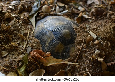 Turtle hibernating under soil on a cold winter day. Selective focus.