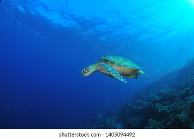 turtle image of sipadan island