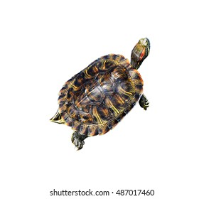 Turtle isolated on white background with clipping path