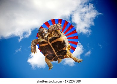 Turtle jumping with a parachute