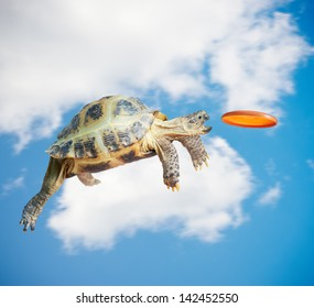 Turtle jumps and catches the frisbee