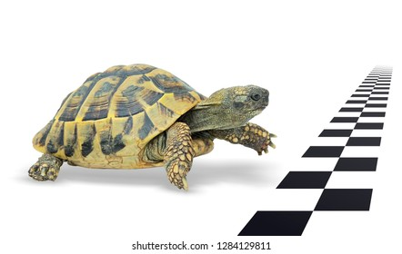 Turtle just before the finish line