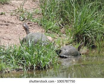 Turtle in Kruger National Park