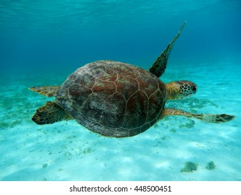 Turtle at little Curacao
