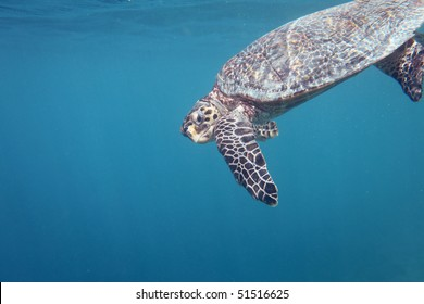 A turtle looking directly into the camera