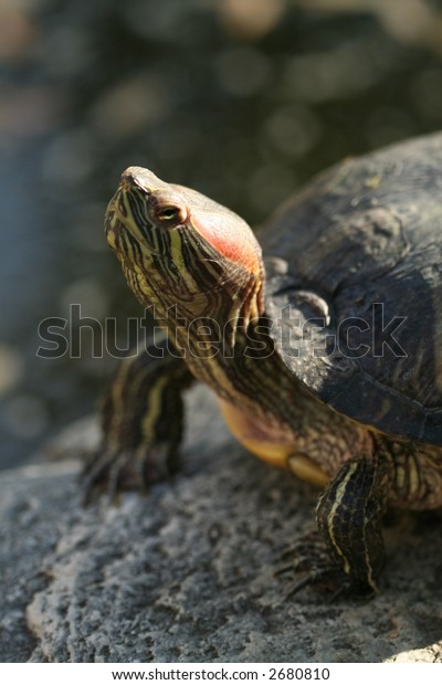 a turtle looks at you