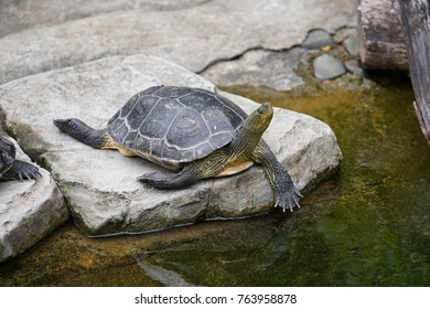 A turtle lying on rock