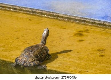 Turtle in Majorelle garden, Marrakesh, Morocco