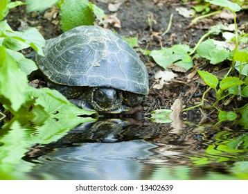 turtle on the bank