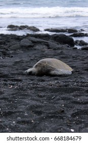 turtle on a black sand beach in Hawaii