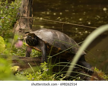 turtle on a branch