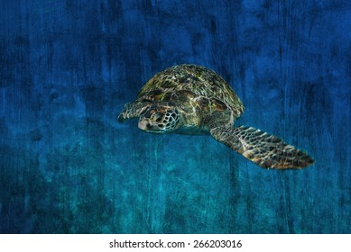 """""""turtle on coral reef"""" Mural. The cement painting concept"""