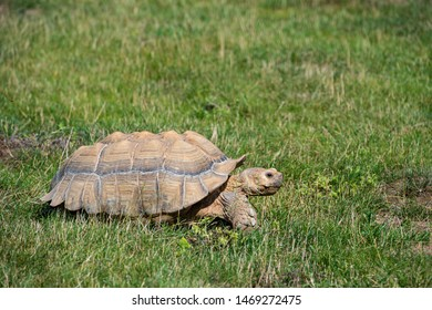 turtle on grass in natural environment