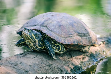 turtle on the log 1