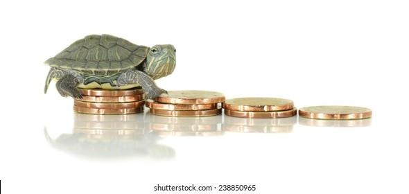 Turtle on money. Slowly concept