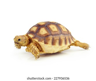 turtle on over white background