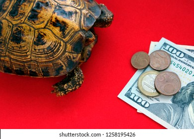 Turtle on a red background. Concept of slow progress of financial flows. Fast or long journey. How to make money fast.