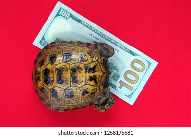 Turtle on a red background. Concept of slow progress of financial flows. Fast or long journey.