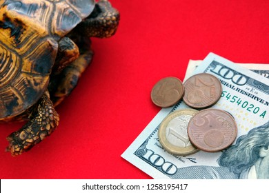 Turtle on a red background. How to make money fast. Concept of slow progress of financial flows. Fast or long journey.