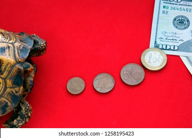 Turtle on a red background. The road from  coins to American paper notes.Concept of slow progress of financial flows. Hundred Dollar Bill. Earnings on drains from beginners.
