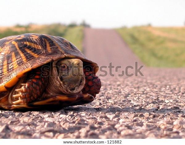 Turtle on Rt. 66